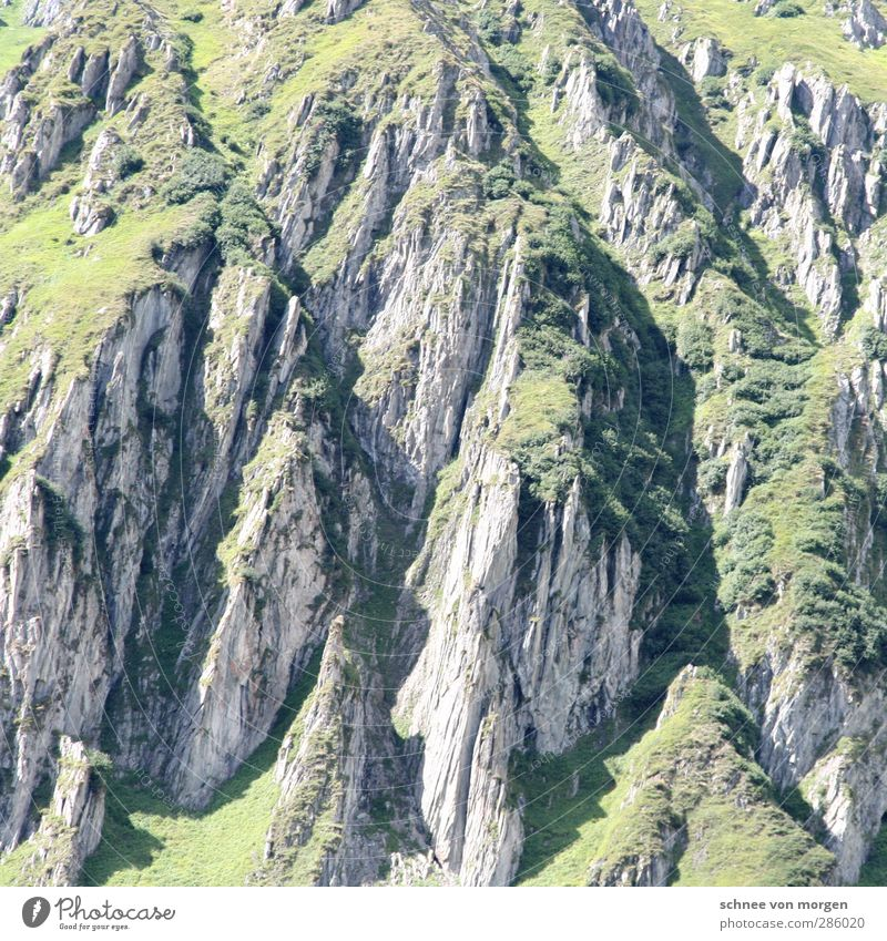 massif Environment Nature Landscape Plant Animal Elements Earth Sun Beautiful weather Foliage plant Agricultural crop Grassland Hill Rock Alps Mountain