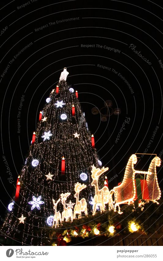 Sky Christmas & Advent City Tree Animal Winter Feasts & Celebrations Line Tourism Aviation Stars Illuminate Stripe Candle Christmas tree Sphere