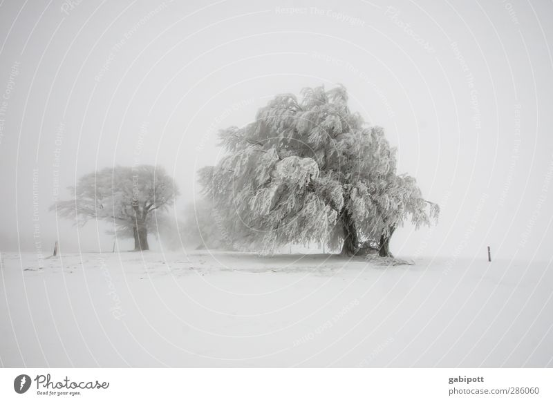 winter's tale Environment Landscape Elements Winter Weather Bad weather Fog Snow Snowfall Tree Field Exceptional Cold White Bizarre Horizon Idyll Nature