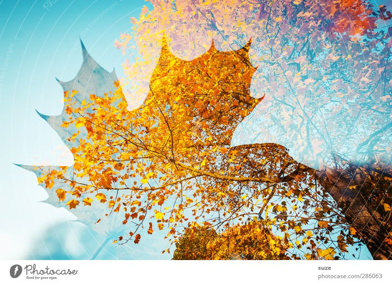 Nature Blue Plant Tree Red Leaf Yellow Environment Autumn Weather Exceptional Beautiful weather Esthetic Transience Creativity Seasons