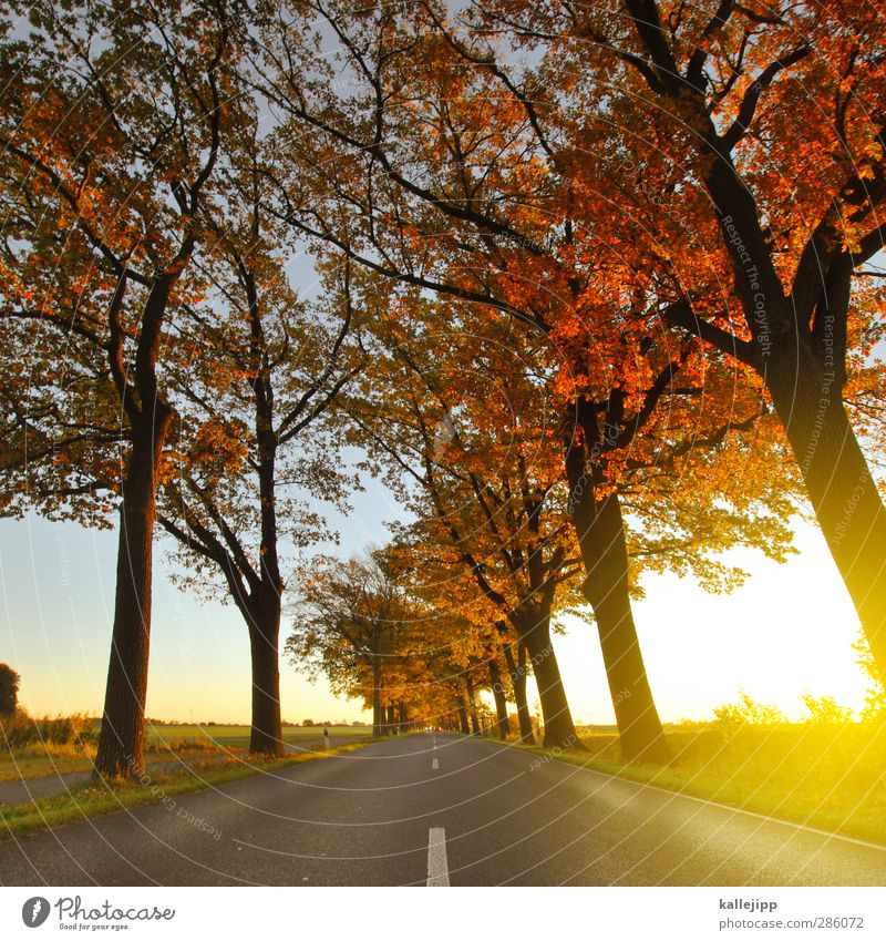 Nature Tree Landscape Environment Street Lanes & trails Field Climate Transport Future Traffic infrastructure Motoring Autumnal Avenue Country road Median strip