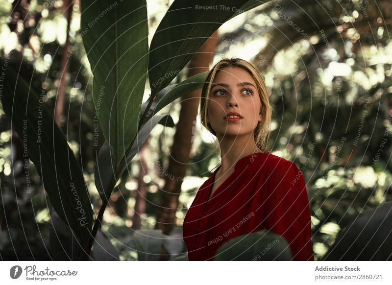 Beautiful blond woman in lush forest Woman Model Dress Green Lush Leaf Exotic magical human face Blonde Virgin forest Natural Hair and hairstyles Red