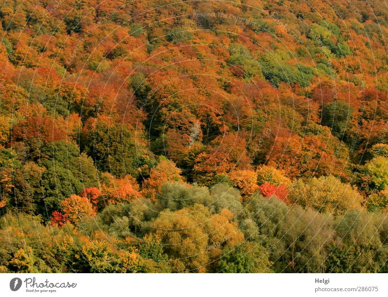 autumnal Environment Nature Landscape Plant Autumn Beautiful weather Tree Bushes Wild plant Forest Mountain Stand To dry up Growth Esthetic Authentic Simple