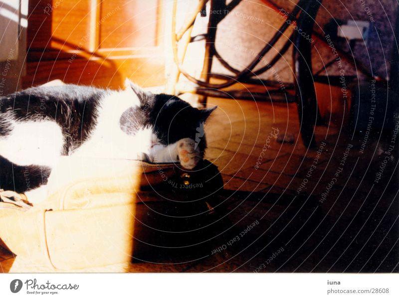 White Sun Dream Cat Warmth Bright Sleep Physics Fatigue France Cozy Purr