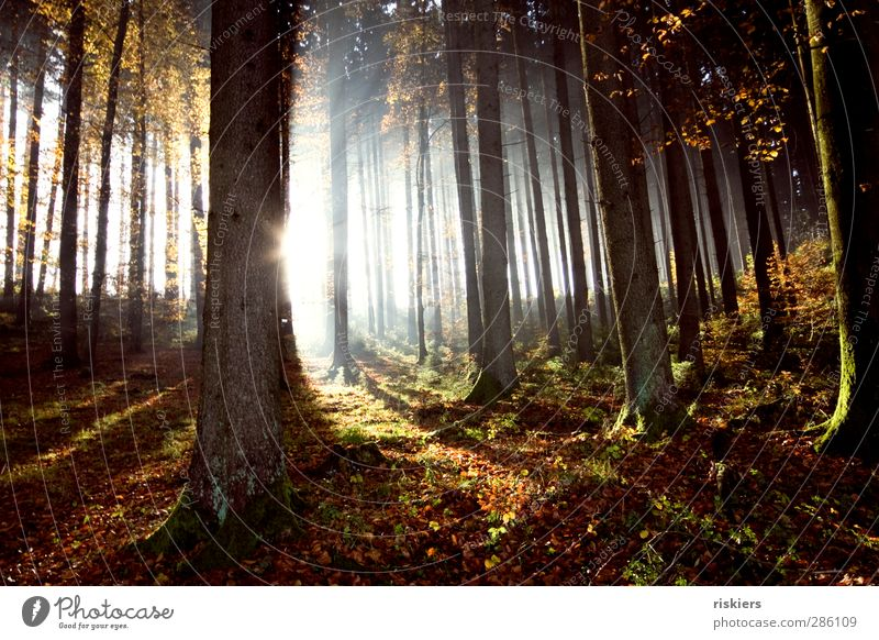Nature Plant Sun Calm Landscape Forest Environment Autumn Life Lighting Dream Moody Fog Beginning Illuminate Idyll