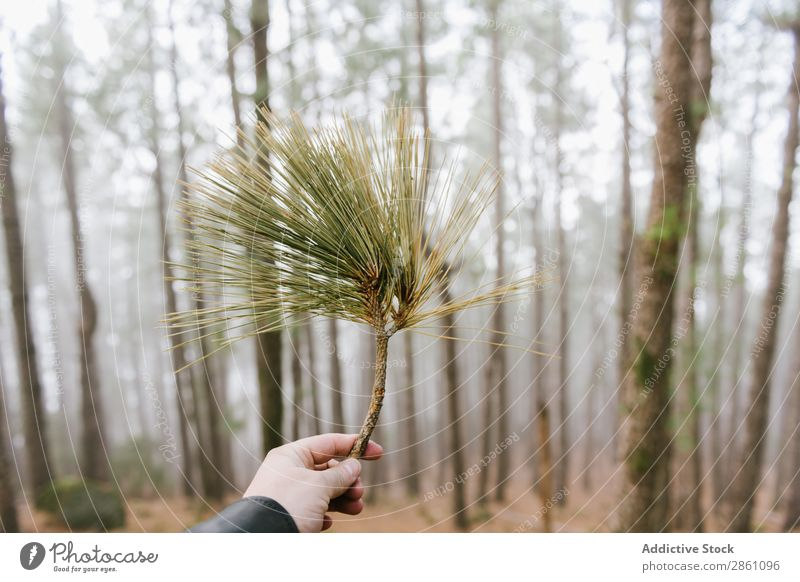 Crop unrecognizable hand showing tree branch Forest Nature Vacation & Travel Branch Evergreen Indicate Tourism Landscape Hiking Beautiful Park Adventure Green