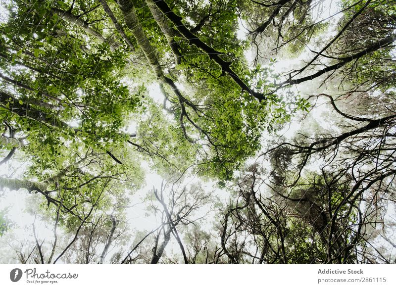 Green treetops in forest Treetop Forest Wood Sky Sun Height Nature Amazing Vantage point Plant Park Beautiful Sunlight Verdant Leaf Growth Branch Garden