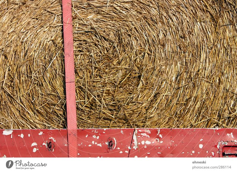 Grass Agriculture Economy Forestry Thorny Straw Feed Trailer Fastening Hay