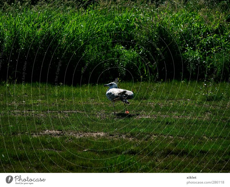 Gull on the river Water Green White Joy Animal Calm Movement Gray Sadness Air Bird Going Field Wild Tall Happiness