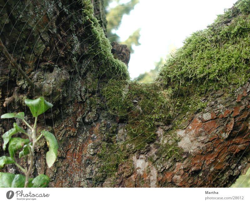Tree Tree trunk Tree bark Apple tree