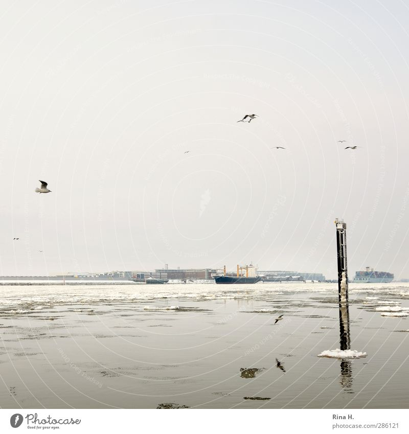 Ice on the Elbe Economy Nature Winter Frost Snow River Hamburg Navigation Container ship Cargo-ship Bird Seagull Flying Authentic Trade Ice floe Colour photo