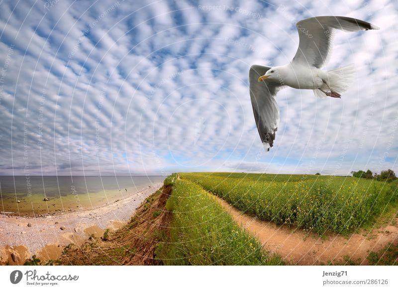 Sky Nature Water Summer Sun Ocean Loneliness Animal Clouds Landscape Environment Spring Coast Air Horizon Bird