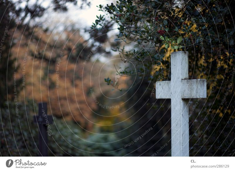 Nature Plant Tree Landscape Dark Cold Autumn Death Sadness Religion and faith Bushes Transience Grief Infinity Belief Christian cross