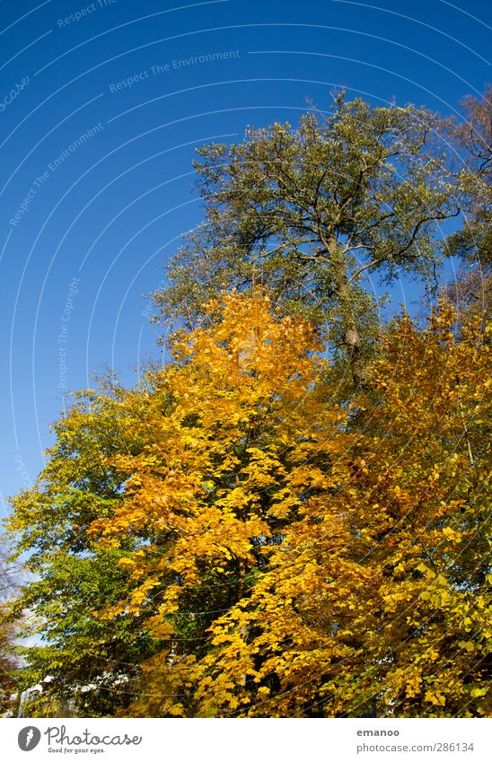 fall silent Environment Nature Landscape Plant Sky Sun Autumn Climate Weather Tree Park Forest Growth Natural Beautiful Blue Yellow Green Leaf Deciduous tree