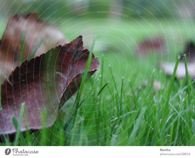 autumn leaf Leaf Grass Meadow Autumn Blade of grass Lawn Moody