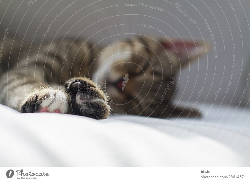 Today is sleeping weather Illness Well-being Contentment Senses Relaxation Calm Animal Pet Cat Baby animal To enjoy Lie Sleep Small Brown Happy Protection