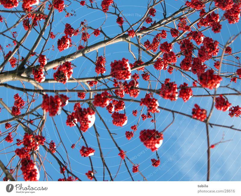 Nature Sky Blue Clouds Emotions Spring Bushes