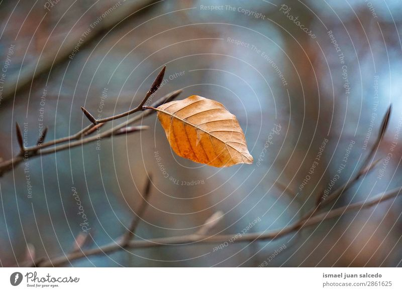 brown tree leaf texture Nature Tree Leaf Winter Autumn Brown Branch Beauty Photography Consistency Fragile