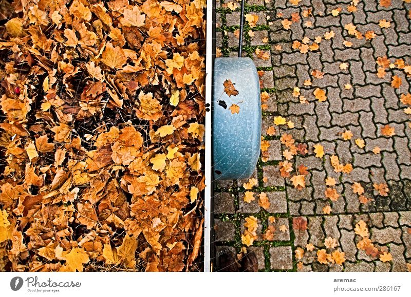 autumn Plant Autumn Leaf Means of transport Street Trailer Yellow Gold Parking lot Accumulate Logistics Cleaning Colour photo Multicoloured Exterior shot