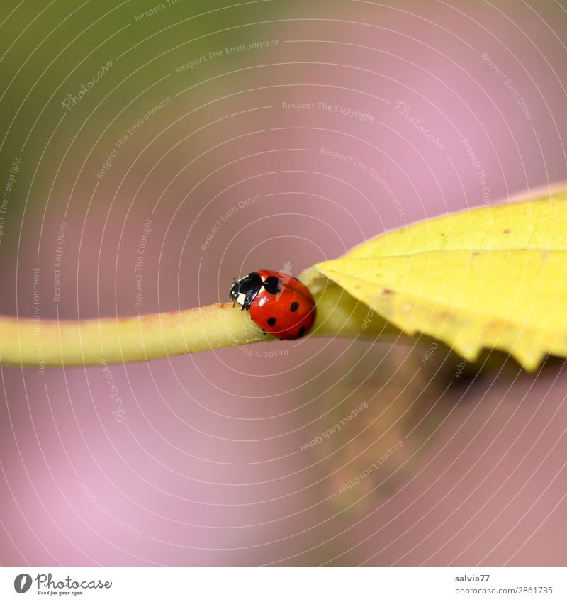 Nature Plant Animal Leaf Autumn Warmth Environment Lanes & trails Happy Small Garden Cute Target Insect Positive Beetle
