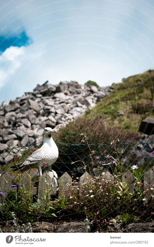 scarecrow Environment Nature Landscape Plant Sky Clouds Summer Beautiful weather Flower Bushes Garden Hill Rock Seagull Figure Fence Garden fence Looking Sit