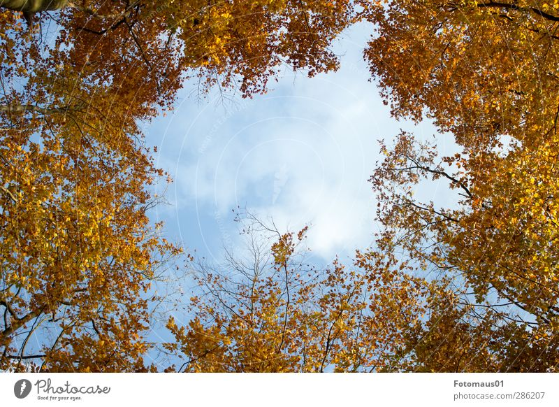 transparency Nature Sky Clouds Autumn Beautiful weather Tree Blue Brown Yellow Gold Orange White Colour photo Exterior shot Copy Space middle Day Sunlight