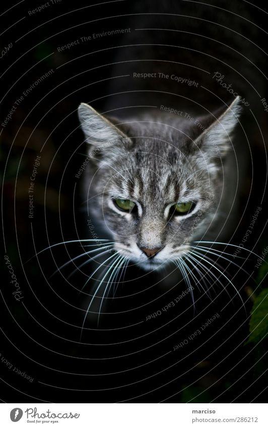 Cat Green Beautiful Animal Wild Cute Curiosity Pet Domestic cat Interest Smart Love of animals Astute Tabby cat
