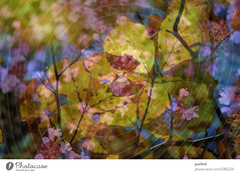 Autumn via spring Nature Spring Flower Leaf Blossom Fragrance Multicoloured Yellow Pink Branch Double exposure Twig Muddled Colour photo Exterior shot Deserted