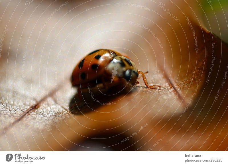 Motion blur? Nature Plant Animal Autumn Weather Beautiful weather Leaf Garden Park Meadow Wild animal Beetle 1 Crawl Sit Brown Green Black Indian Summer