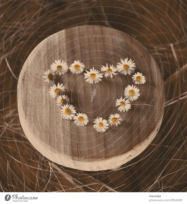 Nature Summer Plant Flower Wood Autumn Environment Love Blossom Spring Happy Together Friendship Heart Romance Kitsch