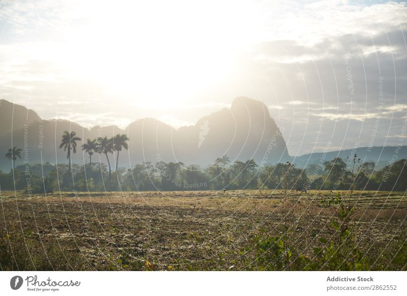 Countryside road on field near palms and hills Street Landscape Field Hill Palm of the hand Cuba Picturesque Lanes & trails Meadow Sun Cliff Sky Clouds Blue