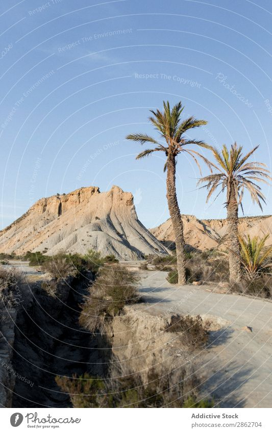 Palms growing at dune Palm of the hand Dune Tourism Tree Vacation & Travel Sand Nature Landscape Beautiful Desert Dry Sunbeam Beach Adventure Coast seascape