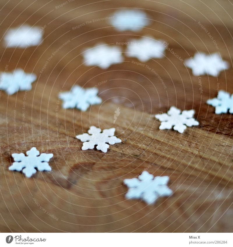 first snow Winter Ice Frost Snow Cold Snowflake Snow crystal Wood Decoration Christmas decoration Colour photo Close-up Pattern Deserted Shallow depth of field
