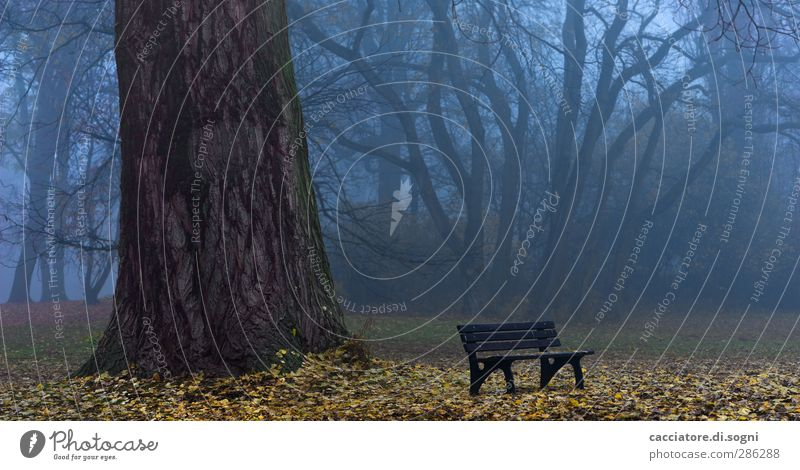 a good place for ghost hunting Landscape Autumn Fog Tree Park Park bench Exceptional Threat Dark Creepy Gloomy Blue Brown Humble Sadness Grief Death Loneliness