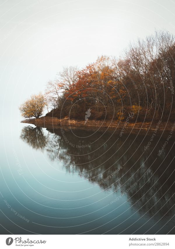 Tranquil water of lake in mist Lake Fog Autumn Forest Tree Peaceful Remote silence Light mood Silent Calm tranquil Still Life Mysterious Landscape Exterior shot