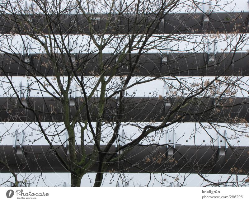Nature City White Plant Tree Winter House (Residential Structure) Environment Wall (building) Emotions Wall (barrier) Moody Brown Facade Gloomy Branch
