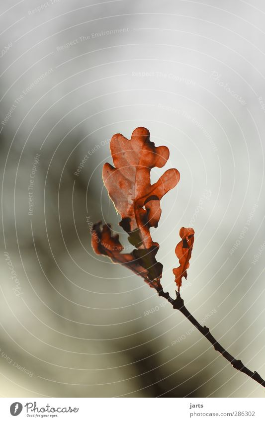 final Environment Nature Plant Autumn Tree Leaf Forest Serene Calm Hope Goodbye Colour photo Exterior shot Close-up Deserted Copy Space top Day
