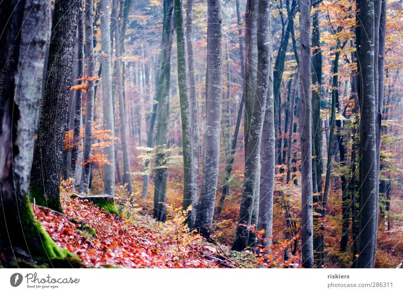 Nature Calm Forest Environment Autumn Moody Idyll