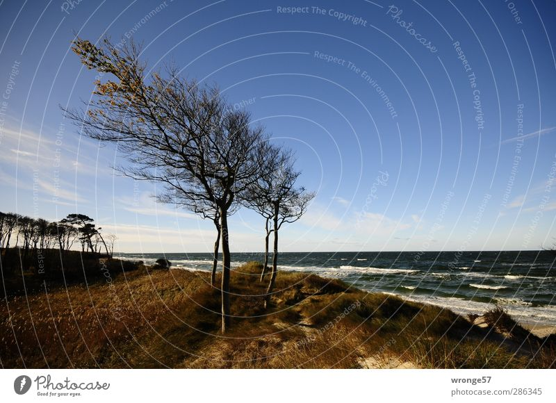 wind harps Vacation & Travel Tourism Trip Beach Ocean Waves Nature Landscape Sky Horizon Autumn Beautiful weather Tree Coast Baltic Sea Island
