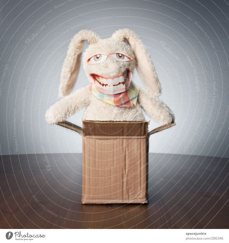White Animal Laughter Happy Brown Exceptional Crazy Happiness Smiling Pelt Toys Discover Hare & Rabbit & Bunny Whimsical Cardboard Trashy