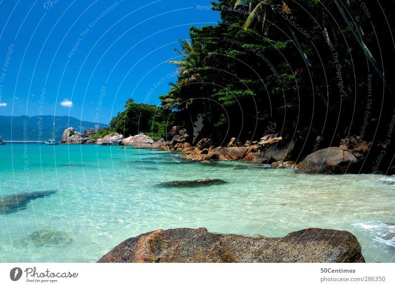 Nature Water Plant Ocean Beach Landscape Blue sky Brazil