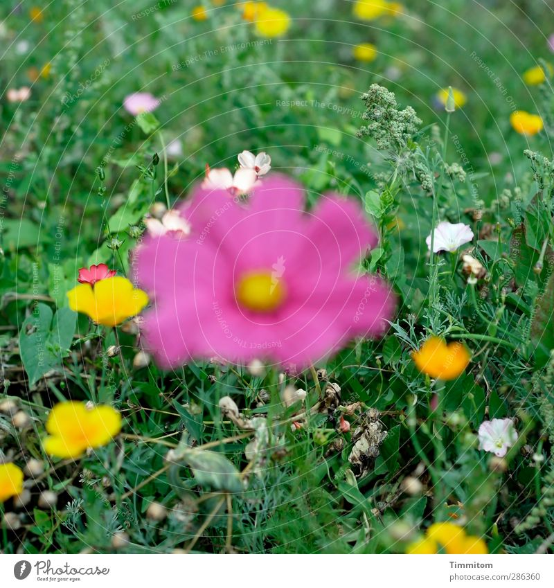 Nature Green White Plant Environment Meadow Emotions Blossom Pink Stand Simple Blossoming Irritation