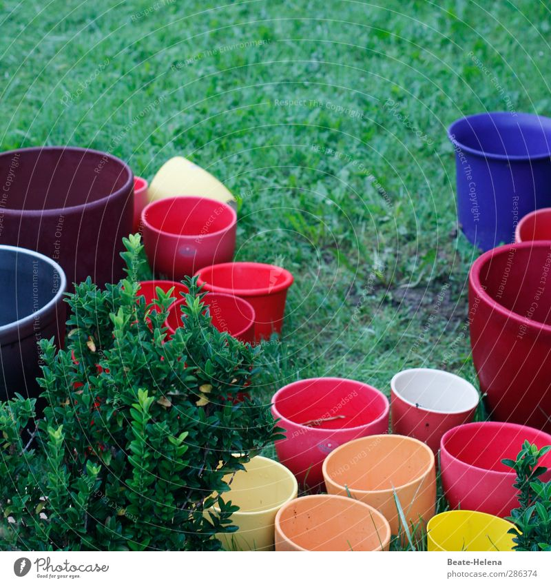 'Torment! | the agony of choice ... Garden Flowerpot Stone Utilize Blue Multicoloured Yellow Orange Red Beautiful repot replant Embellish colour variation