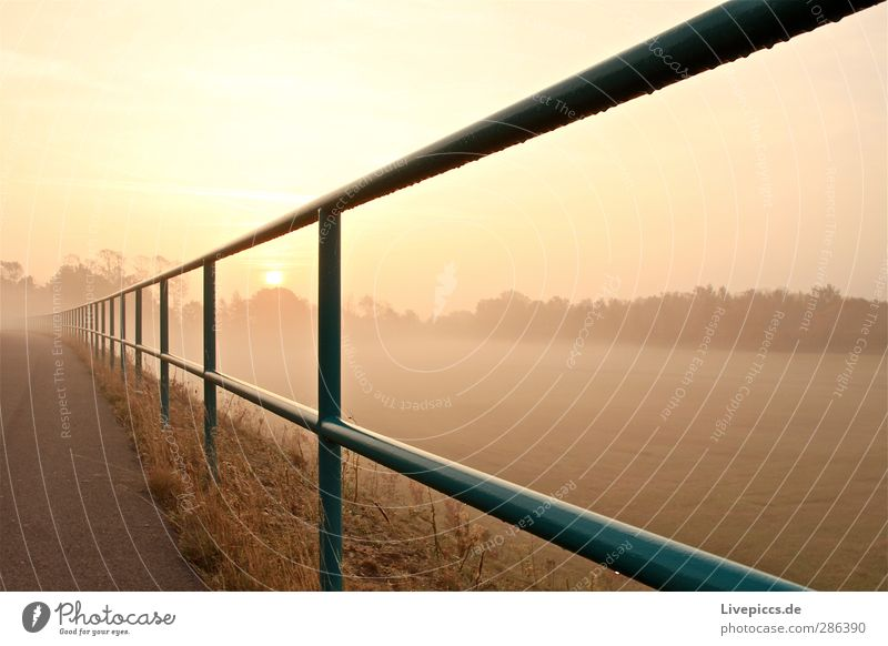 there fence Environment Nature Landscape Sky Cloudless sky Sun Sunrise Sunset Sunlight Autumn Beautiful weather Fog Plant Tree Grass Bushes Wild plant Meadow