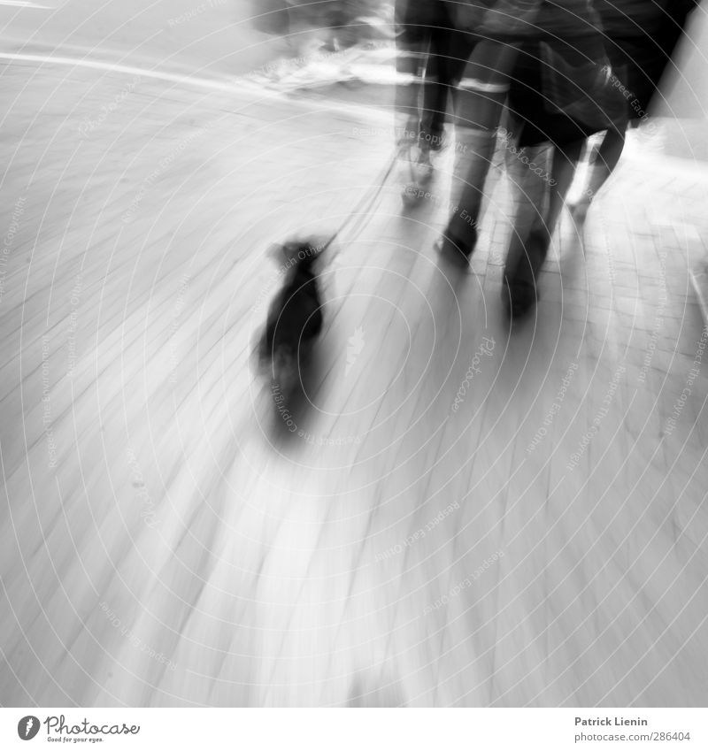 Dog Human being City Animal Loneliness Relaxation Street Life Group Style Moody Leisure and hobbies Walking Lifestyle Communicate Shopping