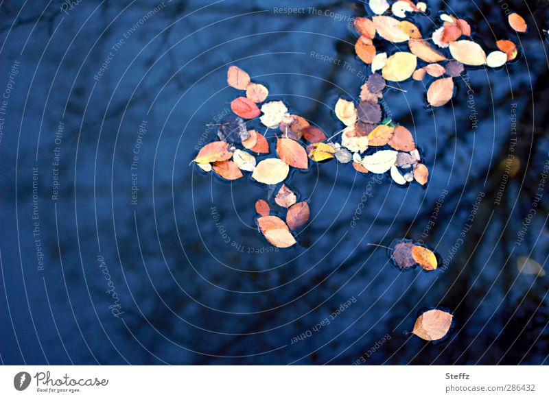 Nature Blue Water Leaf Calm Autumn Copy Space Transience Romance Change Snapshot Autumn leaves Pond Autumnal Nostalgia Surface of water