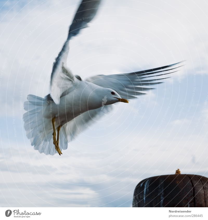 approach Life Vacation & Travel Sky Clouds Ocean Animal Wild animal Bird 1 Movement Flying Friendliness Blue White Esthetic Elegant Freedom Curiosity Seagull