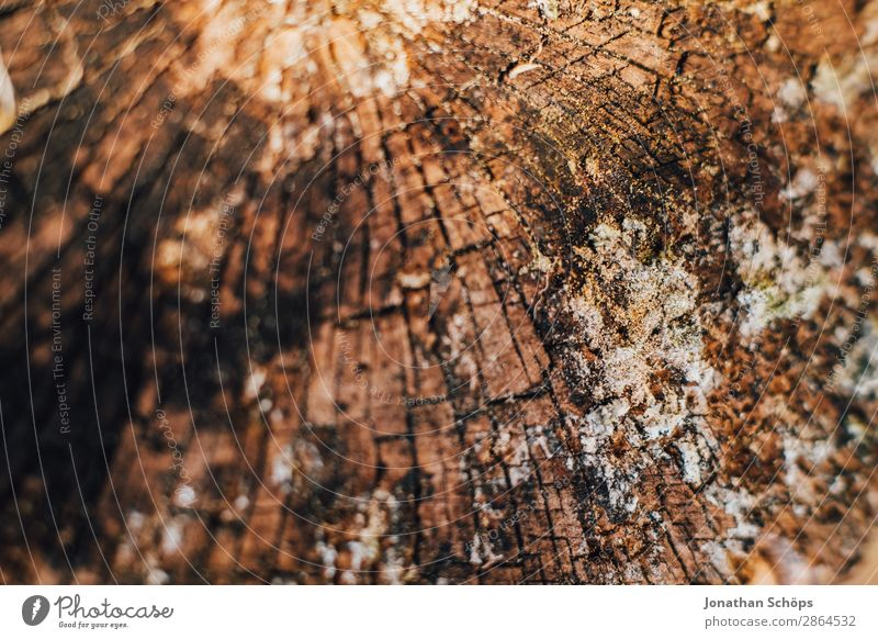 wood texture Garden Spring Tree Wood Brown Background picture Tree trunk Tree bark Structures and shapes Exterior shot Close-up Detail Macro (Extreme close-up)