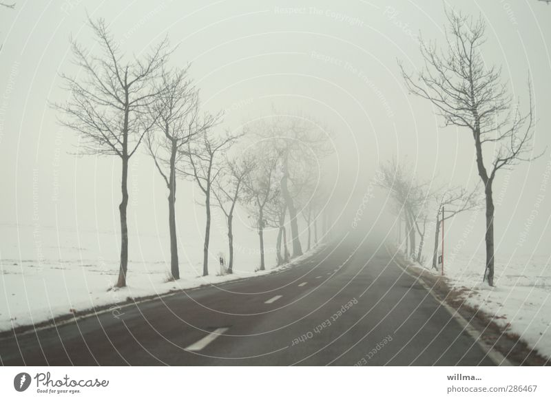 uncertainty Winter Fog Snow tree Street Country road Median strip Infinity chill Fear of the future Lanes & trails Target Avenue Ambiguous Uncertain future