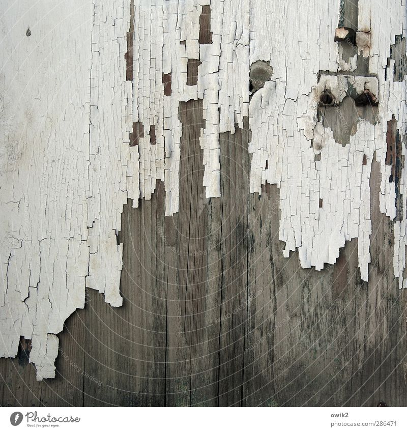 escape attempt Wood Old Gloomy Gray White Transience Dye Ravages of time Derelict Colour photo Subdued colour Exterior shot Close-up Detail Abstract Pattern